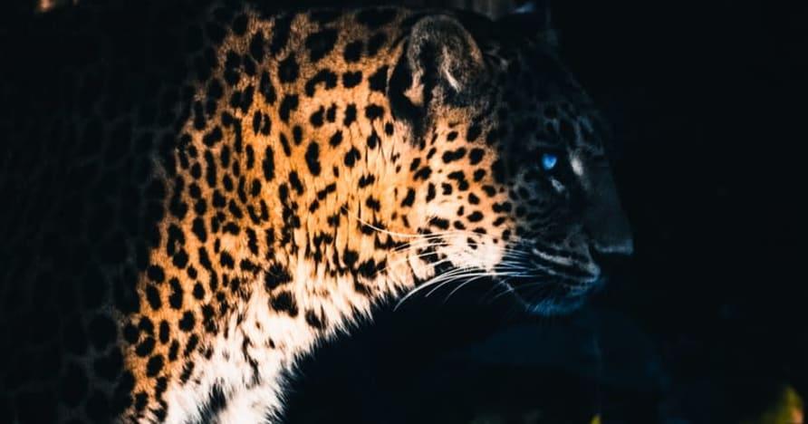 Yggdrasil współpracuje z ReelPlay, aby wypuścić Jaguar SuperWays od Bad Dingo